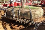 pic-gallery-tree-relocation-004